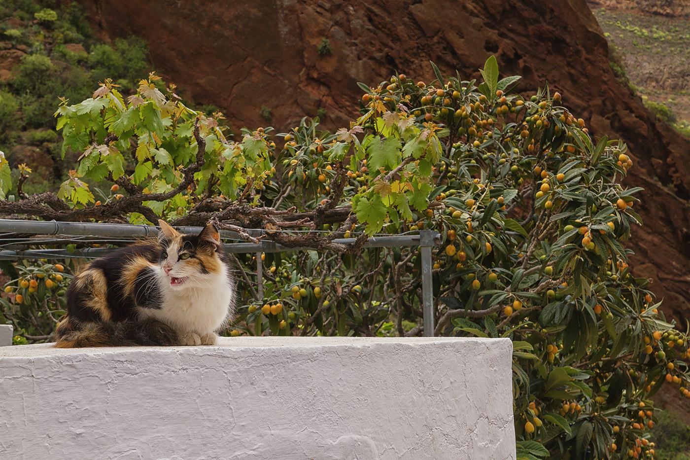 Gran Canaria - Katze auf Mauer