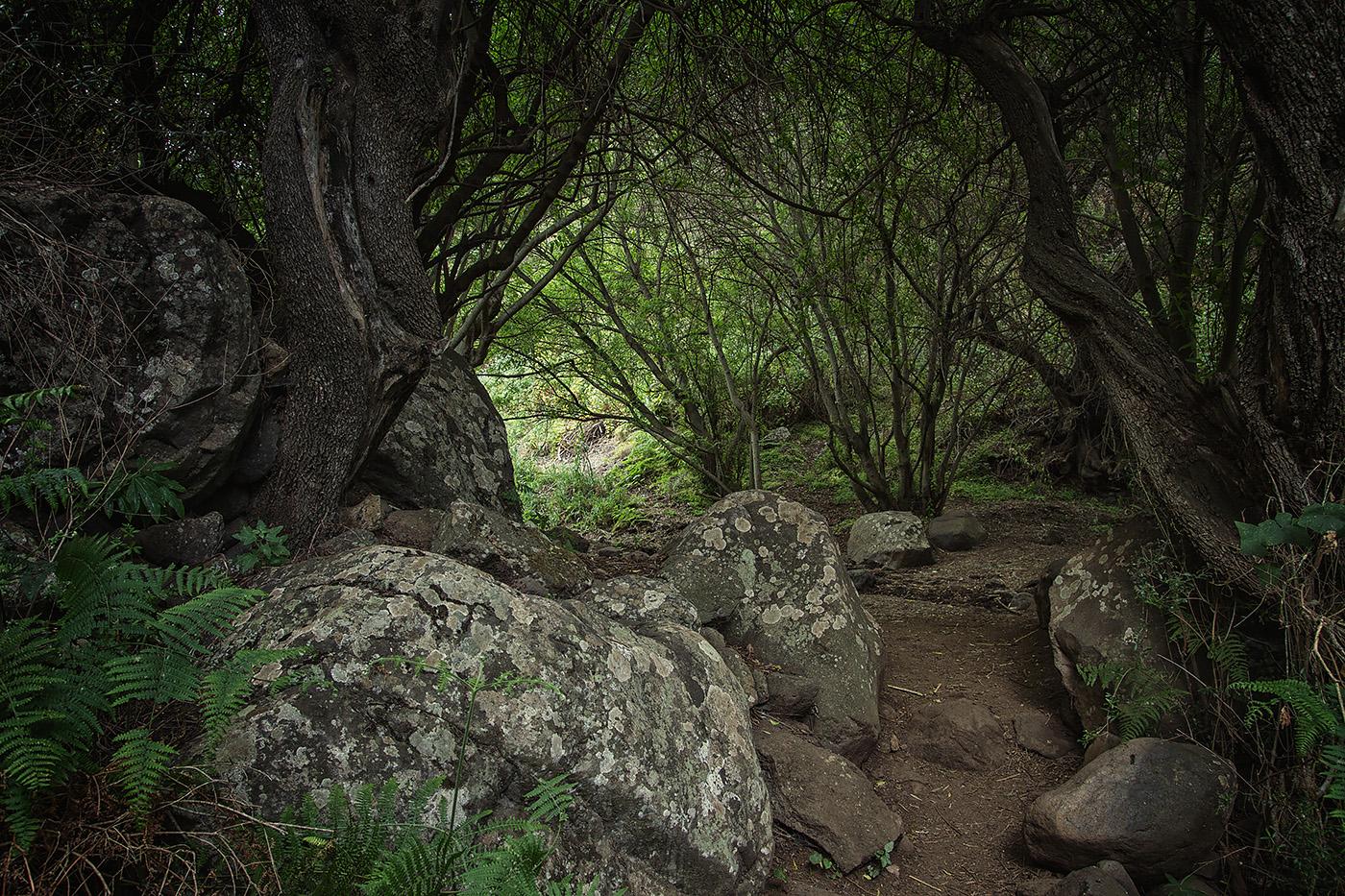 Gran Canaria - Barranco de los Cernicalos